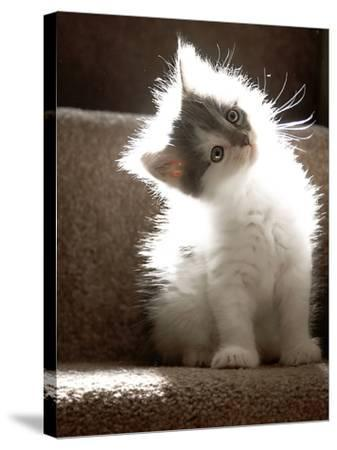Close Up of Small Kitten Sitting at Bottom of Stairs, Glowing under Sunlight-Trigger Image-Stretched Canvas Print