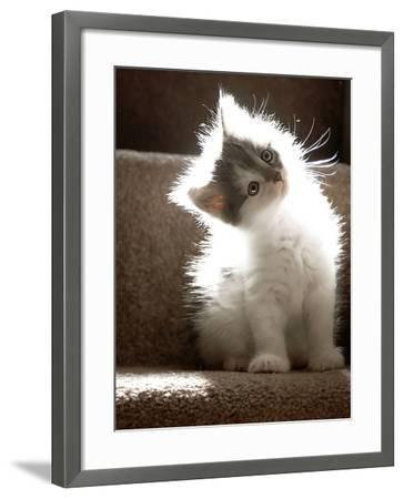 Close Up of Small Kitten Sitting at Bottom of Stairs, Glowing under Sunlight-Trigger Image-Framed Photographic Print