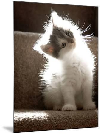 Close Up of Small Kitten Sitting at Bottom of Stairs, Glowing under Sunlight-Trigger Image-Mounted Photographic Print