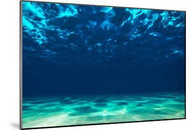 Ocean Bottom, View Beneath Surface-Tomislav Zivkovic-Mounted Photographic Print