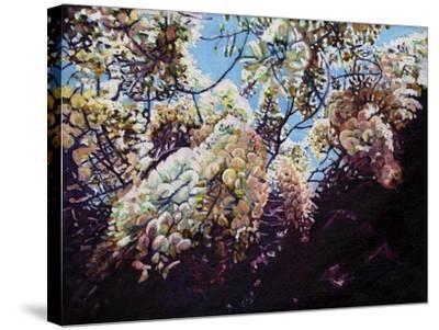 White Wisteria, 2012-Helen White-Stretched Canvas Print