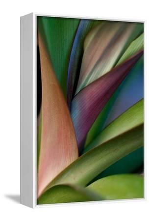 Abstract Floral of a Bird of Paradise Plant-Vickie Lewis-Framed Stretched Canvas Print