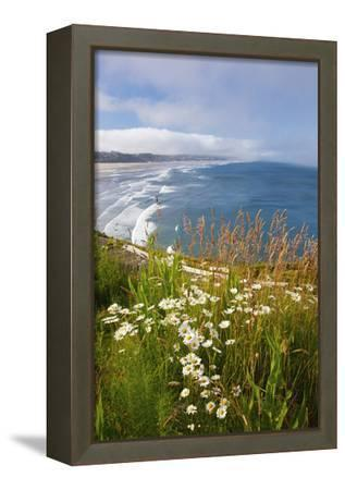 Wildflowers Along Yaquina Head; Newport Oregon United States of America-Design Pics Inc-Framed Stretched Canvas Print