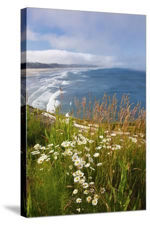 Wildflowers Along Yaquina Head; Newport Oregon United States of America-Design Pics Inc-Stretched Canvas Print