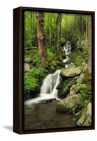 Scenic View of a Smoky Mountains Waterfall and Forest-Darlyne A^ Murawski-Framed Stretched Canvas Print