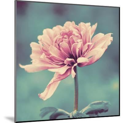 Gorgeous Pink-Gail Peck-Mounted Art Print