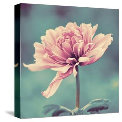 Gorgeous Pink-Gail Peck-Stretched Canvas Print