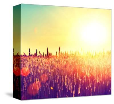Field, Beautiful Nature Sunset Landscape-Subbotina Anna-Stretched Canvas Print