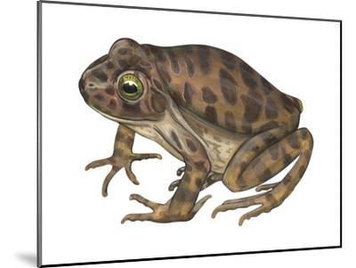 Barking Frog (Eleutherodactylus Latrans), Amphibians-Encyclopaedia Britannica-Mounted Art Print