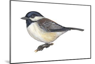 Carolina Chickadee (Parus Carolinensis), Birds-Encyclopaedia Britannica-Mounted Art Print