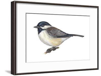 Carolina Chickadee (Parus Carolinensis), Birds-Encyclopaedia Britannica-Framed Art Print