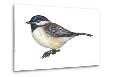 Carolina Chickadee (Parus Carolinensis), Birds-Encyclopaedia Britannica-Metal Print