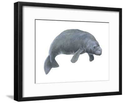 Dugong (Dugong Dugon), Mammals-Encyclopaedia Britannica-Framed Art Print