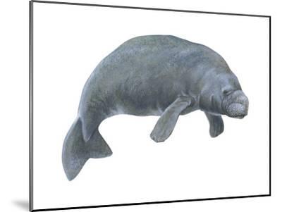Dugong (Dugong Dugon), Mammals-Encyclopaedia Britannica-Mounted Art Print