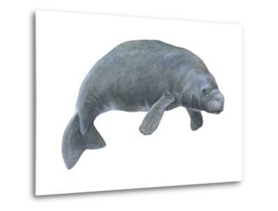 Dugong (Dugong Dugon), Mammals-Encyclopaedia Britannica-Metal Print