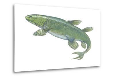 Crossopterygian (Crossopterygii), Fossil, Fishes-Encyclopaedia Britannica-Metal Print