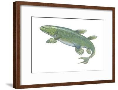 Crossopterygian (Crossopterygii), Fossil, Fishes-Encyclopaedia Britannica-Framed Art Print