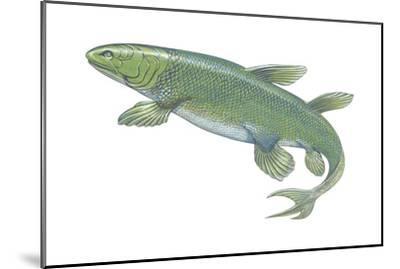 Crossopterygian (Crossopterygii), Fossil, Fishes-Encyclopaedia Britannica-Mounted Art Print