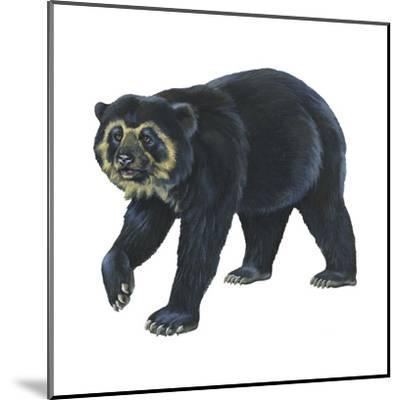 Spectacled Bear (Tremarctos Ornatus), Mammals-Encyclopaedia Britannica-Mounted Art Print