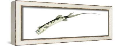 Telescopefish (Gigantura Chuni), Deep Sea Fishes-Encyclopaedia Britannica-Framed Stretched Canvas Print