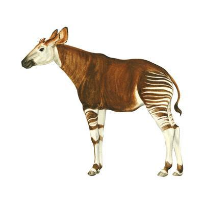 Okapi (Okapi Johnstoni), Mammals-Encyclopaedia Britannica-Framed Art Print