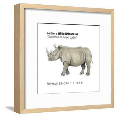 Northern White Rhinoceros (Ceratotherium Simum Cottoni), Mammals-Encyclopaedia Britannica-Framed Art Print