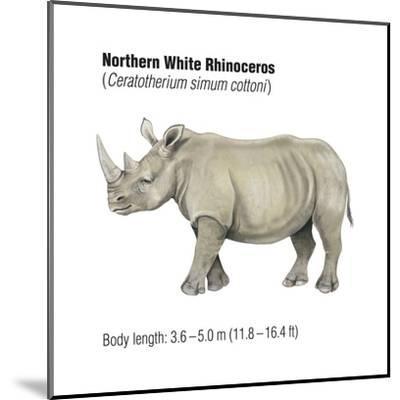 Northern White Rhinoceros (Ceratotherium Simum Cottoni), Mammals-Encyclopaedia Britannica-Mounted Art Print
