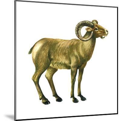 Wild Sheep (Ovis Canadensis), Mammals-Encyclopaedia Britannica-Mounted Art Print