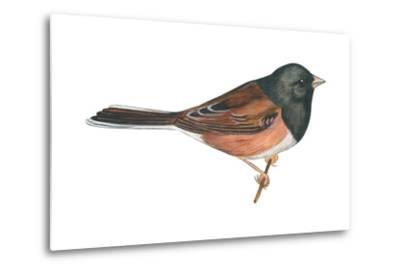 Oregon Junco (Junco Hyemalis Oreganus), Birds-Encyclopaedia Britannica-Metal Print