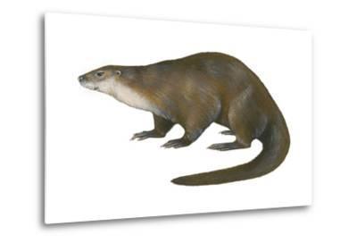 North American River Otter (Lutra Canadensis), Weasel, Mammals-Encyclopaedia Britannica-Metal Print