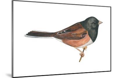 Oregon Junco (Junco Hyemalis Oreganus), Birds-Encyclopaedia Britannica-Mounted Art Print