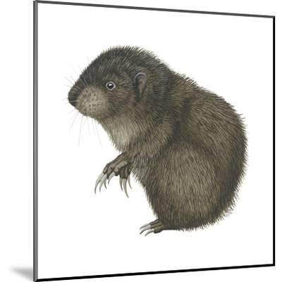 Mountain Beaver (Aplodontia Rufa), Mammals-Encyclopaedia Britannica-Mounted Art Print