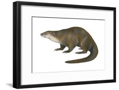 North American River Otter (Lutra Canadensis), Weasel, Mammals-Encyclopaedia Britannica-Framed Art Print