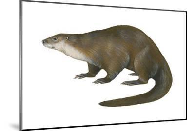 North American River Otter (Lutra Canadensis), Weasel, Mammals-Encyclopaedia Britannica-Mounted Art Print