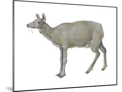 Musk Deer (Moschus Moschiferus), Mammals-Encyclopaedia Britannica-Mounted Art Print