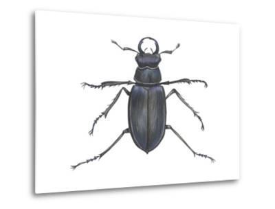 Stag Beetle (Lucanus Capreolus), Insects-Encyclopaedia Britannica-Metal Print