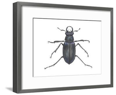 Stag Beetle (Lucanus Capreolus), Insects-Encyclopaedia Britannica-Framed Art Print