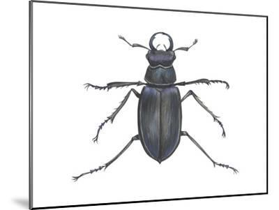 Stag Beetle (Lucanus Capreolus), Insects-Encyclopaedia Britannica-Mounted Art Print
