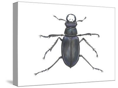 Stag Beetle (Lucanus Capreolus), Insects-Encyclopaedia Britannica-Stretched Canvas Print