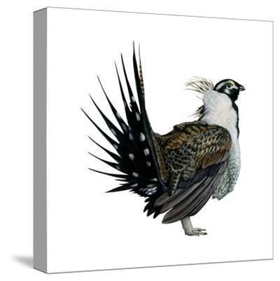 Sage Grouse (Centrocercus Urophasianus), Birds-Encyclopaedia Britannica-Stretched Canvas Print