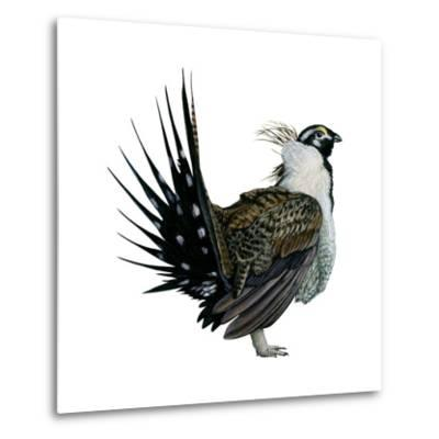 Sage Grouse (Centrocercus Urophasianus), Birds-Encyclopaedia Britannica-Metal Print