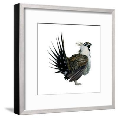 Sage Grouse (Centrocercus Urophasianus), Birds-Encyclopaedia Britannica-Framed Art Print