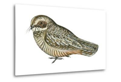 Poorwill (Phalaenoptilus Nuttallii), Birds-Encyclopaedia Britannica-Metal Print