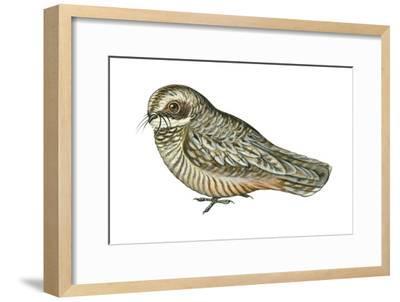 Poorwill (Phalaenoptilus Nuttallii), Birds-Encyclopaedia Britannica-Framed Art Print