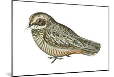 Poorwill (Phalaenoptilus Nuttallii), Birds-Encyclopaedia Britannica-Mounted Art Print