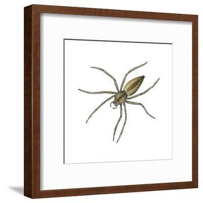 Nursery Web Spider (Pisaurina Mira), Arachnids-Encyclopaedia Britannica-Framed Art Print