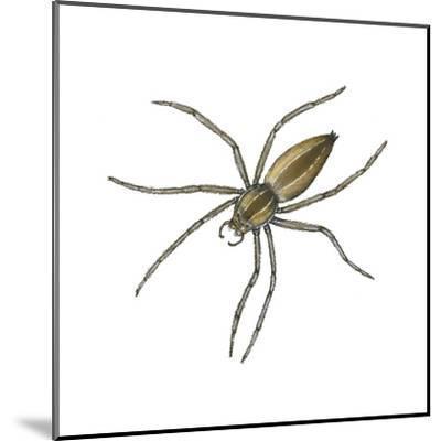 Nursery Web Spider (Pisaurina Mira), Arachnids-Encyclopaedia Britannica-Mounted Art Print