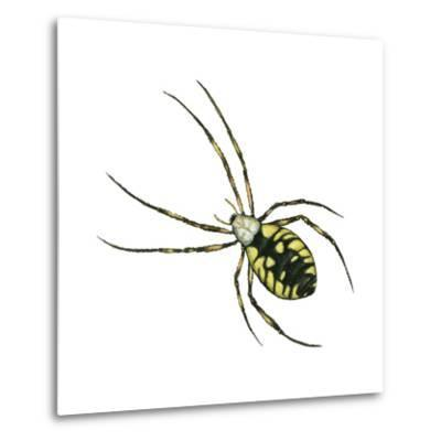 Golden Garden Spider (Argiope Aurantia), Arachnids-Encyclopaedia Britannica-Metal Print