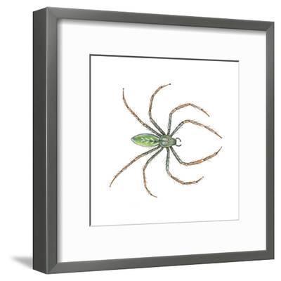 Green Lynx Spider (Peucetia Viridans), Arachnids-Encyclopaedia Britannica-Framed Art Print
