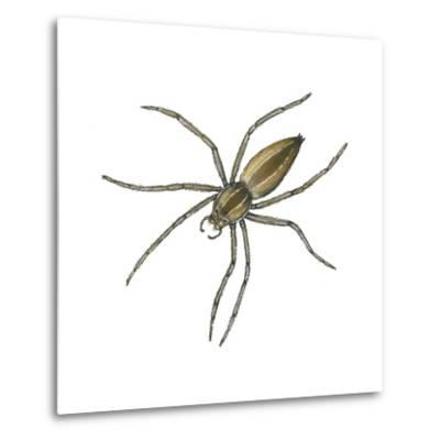 Nursery Web Spider (Pisaurina Mira), Arachnids-Encyclopaedia Britannica-Metal Print